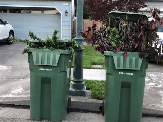 green bins full of tree limbs and bushes