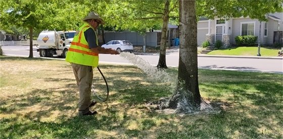 An image of a man watering a tree